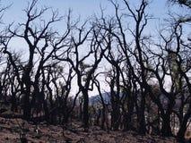 火在卡塔龙尼亚: 自然灾害 免版税库存图片