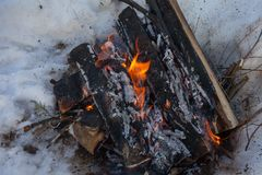 火在桦树木头雪的冬天森林里  免版税库存图片