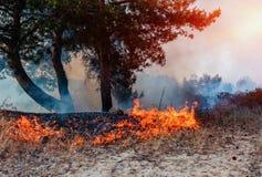 火在森林里,森林火灾 在树和灌木的灼烧的叶子 图库摄影