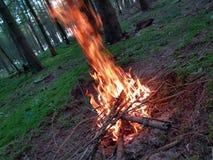 火在森林里 库存图片
