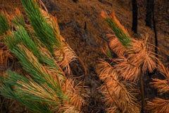 火在秋天击中了一棵杉树 库存图片