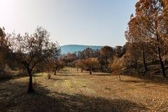 火在葡萄牙, Alcabideque火 免版税库存图片