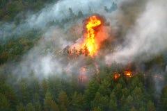 火在野火森林里  免版税库存照片