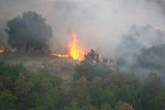 火在野火森林里  图库摄影