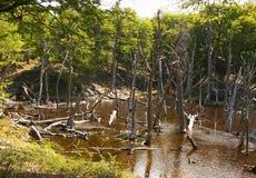 火地岛国家公园森林 免版税图库摄影