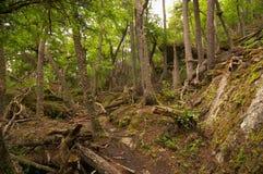 火地群岛国家公园森林 库存照片