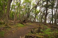 火地群岛国家公园森林 库存图片