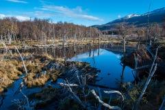 火地群岛,南阿根廷风景  免版税库存图片