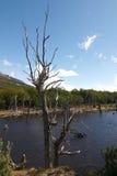 火地群岛Park湖 免版税库存图片
