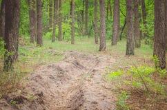 火垄沟在森林里 免版税库存图片