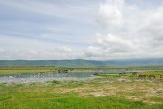 火山口ngorongoro 图库摄影