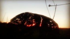 火山叶子 库存照片