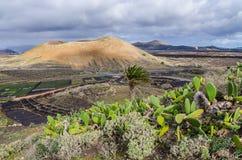 火山土地  库存图片