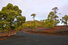 黑火山土壤和绿色杉树 免版税库存图片
