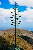 火山岛,兰萨罗特岛 库存照片