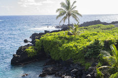 黑火山岩形成和绿叶在夏威夷 免版税库存照片