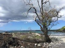 火山岩石海滩 库存照片