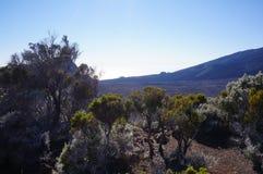 火山岩钉de la fournaise谷 库存图片
