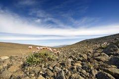 火山横向的寒带草原 库存照片