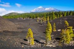 火山泰德峰的看法在竞技场Negras附近的 伟大的自然 免版税库存照片