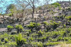 火山的土地全景的植物 库存图片