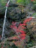 火山的火山岩床&秋天颜色 库存照片