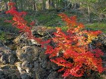 火山的火山岩床&秋天颜色 免版税库存照片