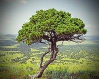 火山的结构树 免版税库存图片