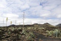 火山的风景在兰萨罗特岛 库存图片