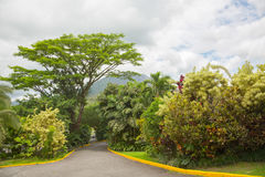 火山阿雷纳尔锥体在哥斯达黎加 免版税库存照片