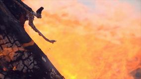 火是灼烧的木头 股票视频