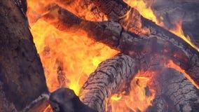 火是灼烧的木头 影视素材