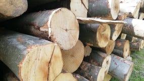 火木树森林 库存图片