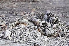 火木头炭烬 库存照片