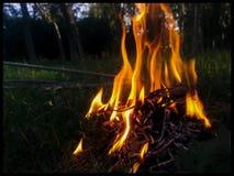 火本质上 库存图片