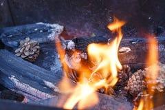 火本质上 在森林特写镜头的篝火 库存照片