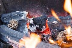 火本质上 在森林特写镜头的篝火 免版税库存图片