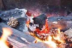 火本质上 在森林特写镜头的篝火 库存图片