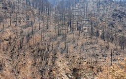 火森林保持 免版税库存图片