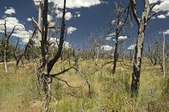 火森林mesa verde 库存照片