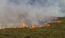 火欧石南丛生的荒野 免版税库存图片