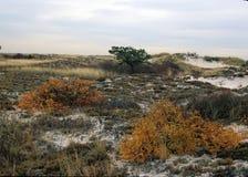 火海岛全国海滨-后面沙丘地区 免版税图库摄影