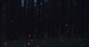 火火花在夜森林前面慢慢地上升 库存照片