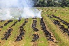火灼烧的米秸杆 库存图片