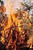 火烧与在野餐的明亮的火焰 免版税库存图片