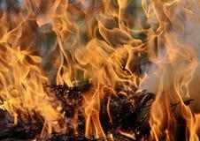 火烧与在野餐的明亮的火焰 库存照片
