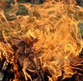 火烧与在野餐的明亮的火焰 库存图片