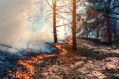 火烧伤森林 库存图片