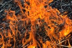 火焰和灰7 免版税库存照片