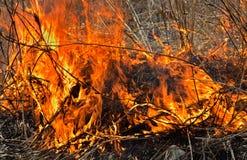 火焰和灰5 库存图片